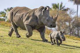 Rhino internet 2